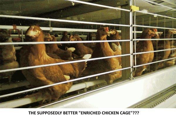 "The new and improved ""enriched chicken cages""!!!"